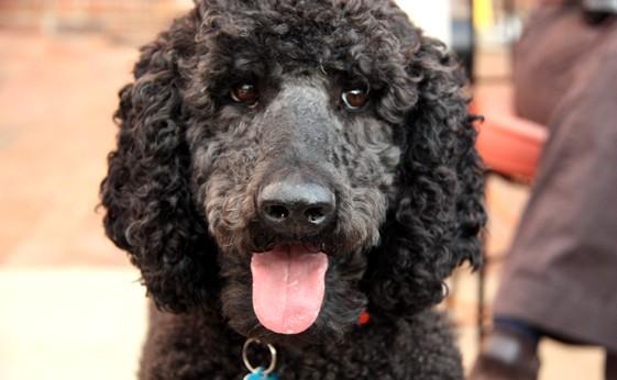 Sarko the Dog - Photo by Daniel McCord