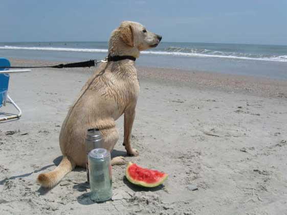 Josie at the beach